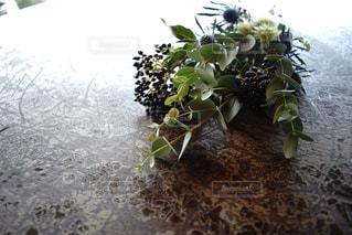 植物の写真・画像素材[936240]