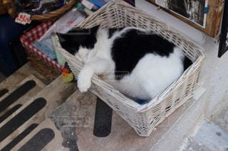 猫の写真・画像素材[316121]