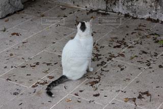 猫の写真・画像素材[316133]