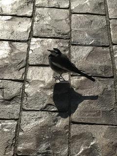 鳥の写真・画像素材[316951]