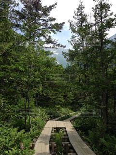 森林の写真・画像素材[320265]