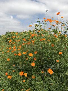 花の写真・画像素材[673480]