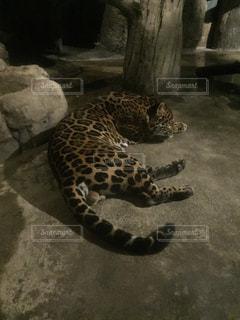 動物の写真・画像素材[314741]