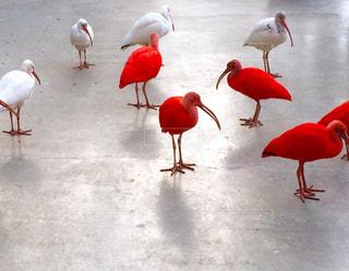 鳥の写真・画像素材[320345]