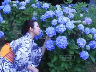 紫陽花の写真・画像素材[315104]