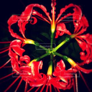 近くの花のアップの写真・画像素材[1068194]