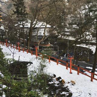 雪の写真・画像素材[324016]