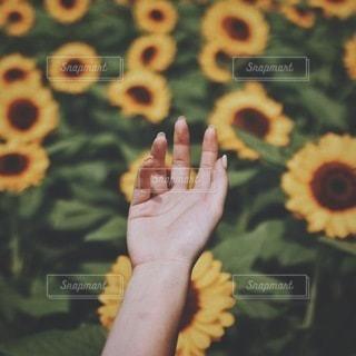 夏の写真・画像素材[2779]