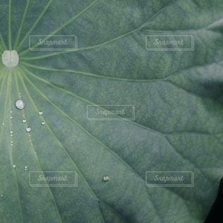 水滴の写真・画像素材[2773]