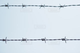 有刺鉄線の写真・画像素材[2770]