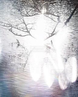 自然の写真・画像素材[2756]