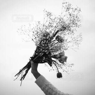 花束の写真・画像素材[2755]