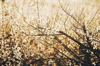 自然の写真・画像素材[2753]