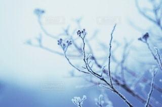 冬の写真・画像素材[2750]