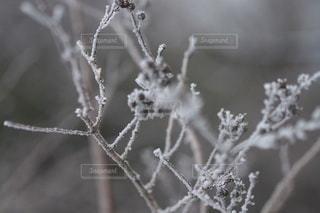 自然の写真・画像素材[2744]