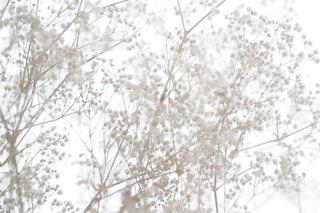 自然の写真・画像素材[2743]
