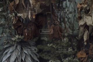 自然の写真・画像素材[2738]