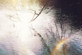自然の写真・画像素材[2736]