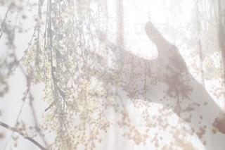 自然の写真・画像素材[2733]