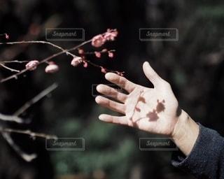 自然の写真・画像素材[2730]