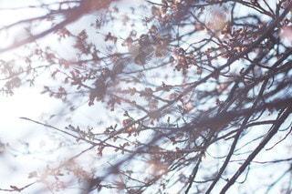 自然の写真・画像素材[2729]