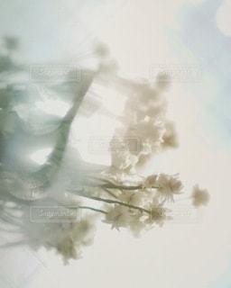 自然の写真・画像素材[2722]