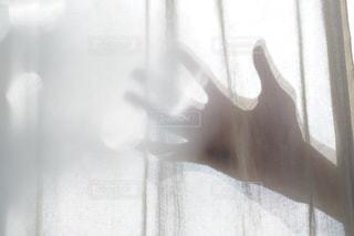 手の写真・画像素材[2721]