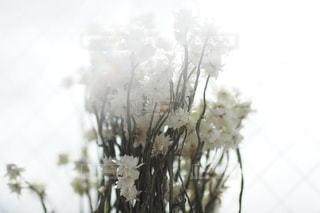 花の写真・画像素材[2720]