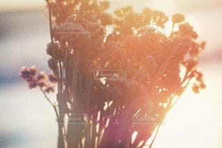 花束の写真・画像素材[2716]