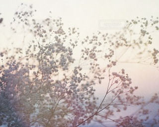 自然の写真・画像素材[2713]