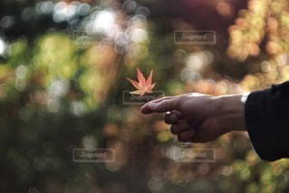 自然の写真・画像素材[2703]