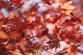 秋の写真・画像素材[2701]