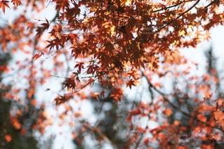 秋の写真・画像素材[2700]