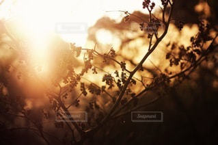 自然の写真・画像素材[2699]