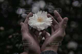 花の写真・画像素材[2697]