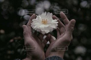 自然の写真・画像素材[2697]