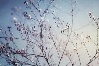 自然の写真・画像素材[2696]