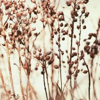 自然の写真・画像素材[2691]