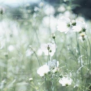 自然の写真・画像素材[2690]