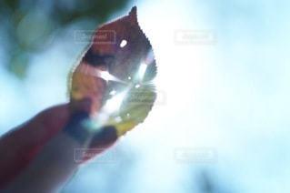 自然の写真・画像素材[2688]