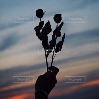 花の写真・画像素材[2686]