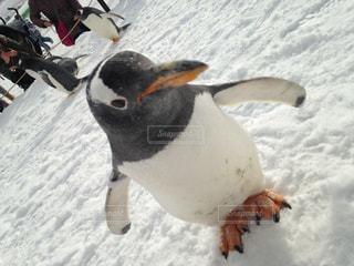 ペンギン - No.316425