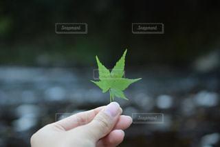 手の写真・画像素材[315556]