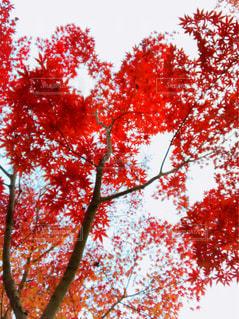 自然の写真・画像素材[317159]