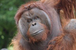No.359522 猿