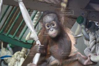 猿の写真・画像素材[361644]