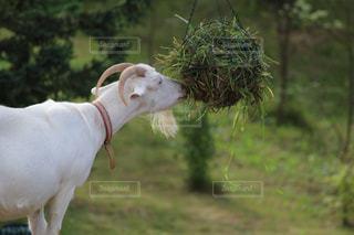野生動物の写真・画像素材[361645]
