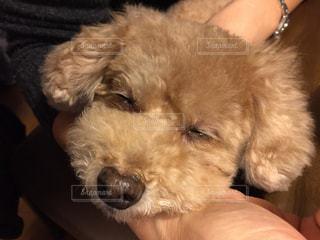 犬の写真・画像素材[315666]