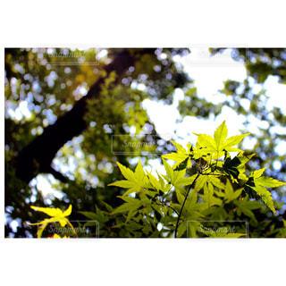 自然の写真・画像素材[315392]
