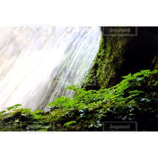 自然の写真・画像素材[315411]
